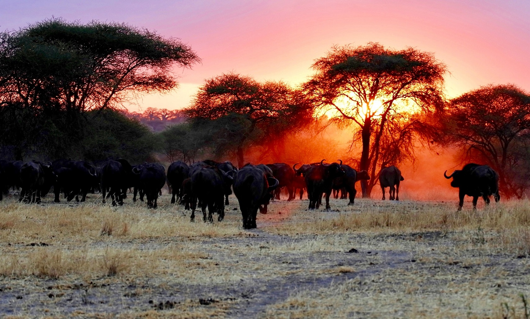 Tanzānija